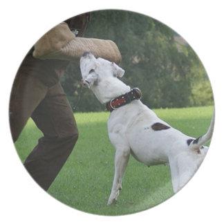 Schutzhund American Bulldog Plate