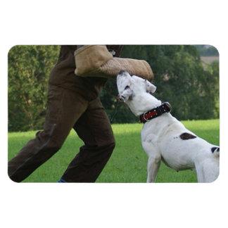Schutzhund American Bulldog Rectangle Magnet