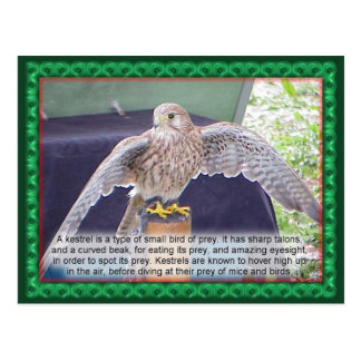 Science, animals, bird, Kestrel Postcard