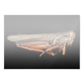 Science - Entomology - The specimin 13 Cm X 18 Cm Invitation Card