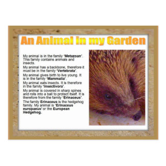 Science, Life Science, An animal in my garden Postcard