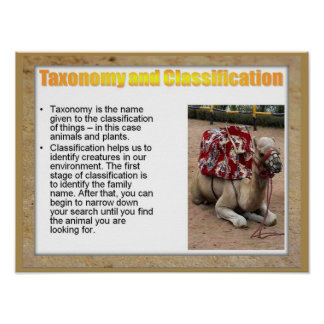 Science, Life science, Taxenomy and Classification Poster