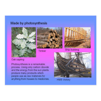 Science Made by Photosynthesis Postcard