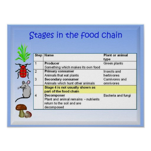 Science, Nutrition, Stages in the food chain Poster