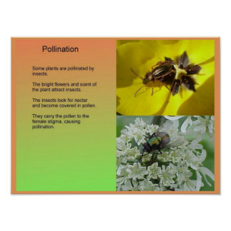 Science, PLants, Reproduction, Pollination Poster