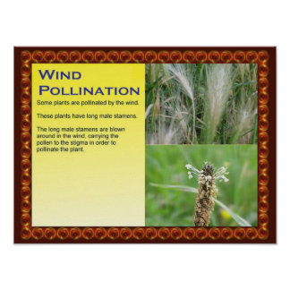 Science, Plants, Reproduction, Wind Pollination Poster