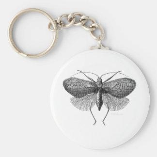 scientific illustration of moth key chains