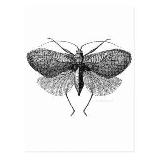 scientific illustration of moth postcard