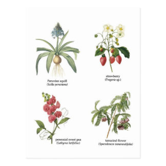 Scientific plant names postcard