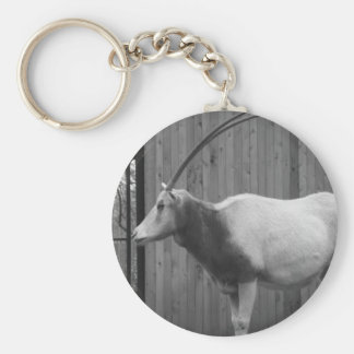 Scimitar-Horned Oryx Basic Round Button Key Ring
