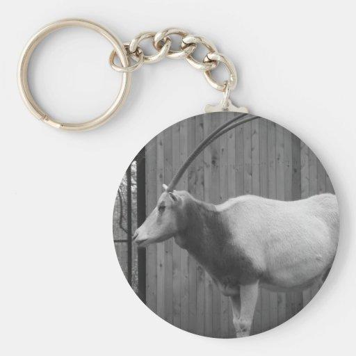 Scimitar-Horned Oryx Keychain