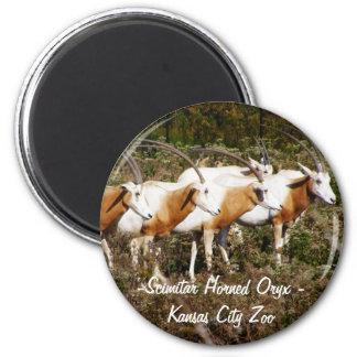 Scimitar Horned Oryx Magnet