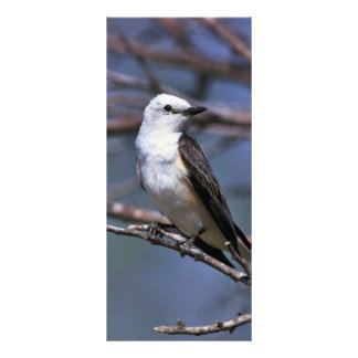 Scissor-tailed Flycatcher Personalized Rack Card