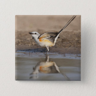 Scissor-tailed Flycatcher reflected in pond 15 Cm Square Badge