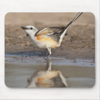 Scissor-tailed Flycatcher reflected in pond Mouse Mat