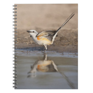 Scissor-tailed Flycatcher reflected in pond Spiral Notebook