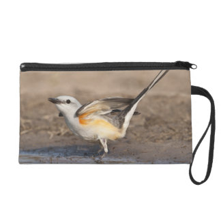 Scissor-tailed Flycatcher reflected in pond Wristlet