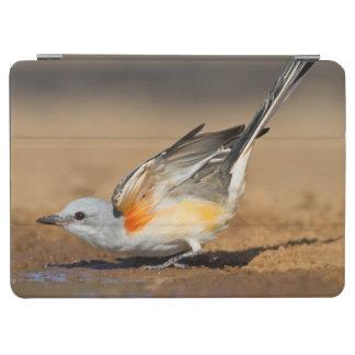 Scissor-Tailed Flycatcher (Tyrannus Forficatus) iPad Air Cover