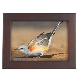 Scissor-Tailed Flycatcher (Tyrannus Forficatus) Keepsake Box