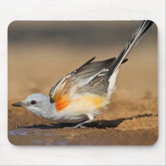 Scissor-Tailed Flycatcher (Tyrannus Forficatus) Mouse Mat