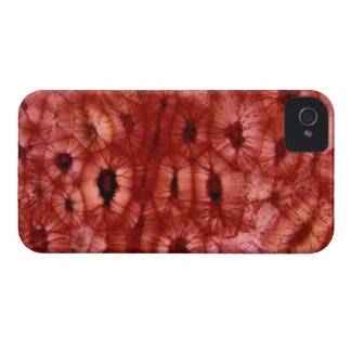 Sclerenchyma Cells from a Cherry Pit iPhone 4 Case
