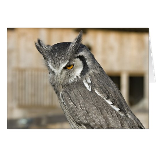 Scops Owl Landscape Card