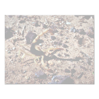 Scorpion, Arizona Custom Invitation