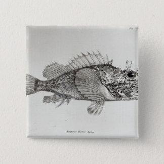 Scorpion Fish 15 Cm Square Badge