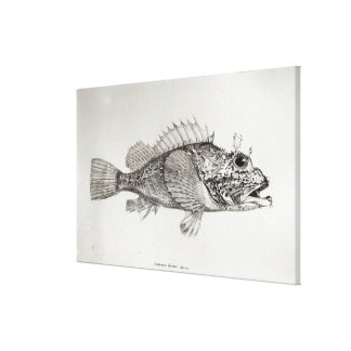 Scorpion Fish Canvas Print