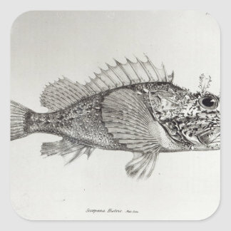 Scorpion Fish Square Sticker