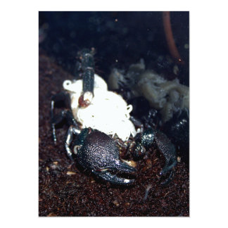 Scorpion Mother and Children Custom Invite