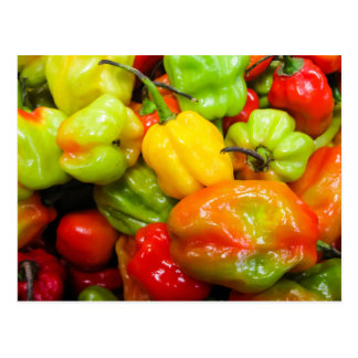 Scotch Bonnet Chilli Peppers Postcard