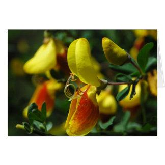 Scotch Broom Blossoms Card