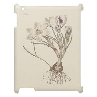 Scotch Crocus Botanical Illustration iPad Cases