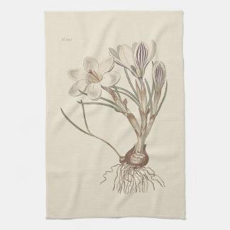 Scotch Crocus Botanical Illustration Tea Towel