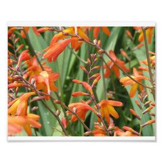 Scotland Florals Art Photo