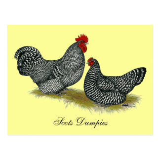 Scots Dumpy Chickens Postcard
