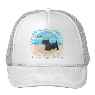 Scottie at the Beach Hats