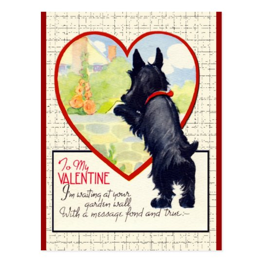 Scottie dog Valentine Scottish Terrier Postcard