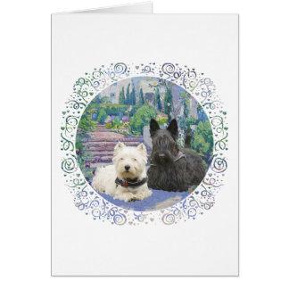 Scottie & Westie in Cozy Garden Greeting Cards