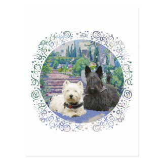Scottie & Westie in Cozy Garden Postcard