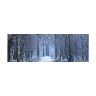 Scottish Bluebell Woods in Winter Canvas Print