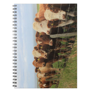 Scottish Cow Notebook