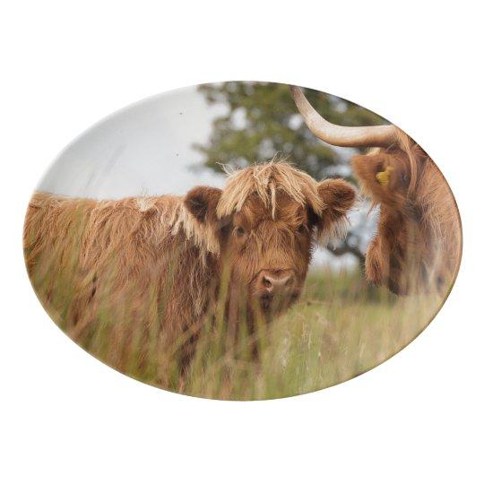 Scottish cow photograph porcelain serving platter