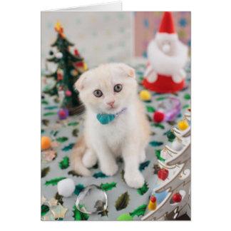 Scottish Fold At Christmas Card