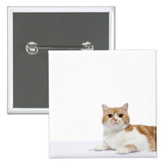 Scottish Fold Cat 15 Cm Square Badge