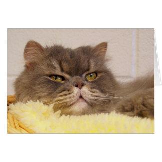 Scottish fold cat Card