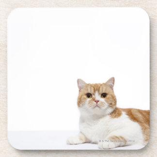 Scottish Fold Cat Drink Coaster
