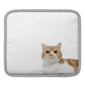 Scottish Fold Cat iPad Sleeve