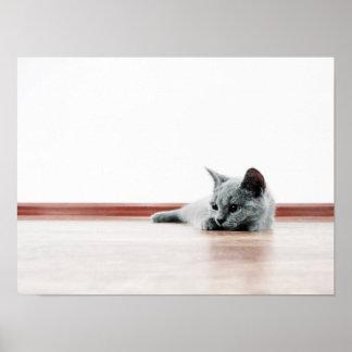 Scottish Fold Cat Kitten Super Cute Poster